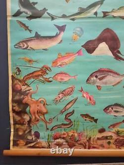 Antigue Linen Litho School Educational Fishes Wall Map World of the Sea
