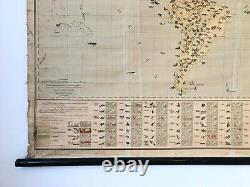 Giant Rare Orig. Vintage Zoogeography World Pictorial Map Animal Distribution